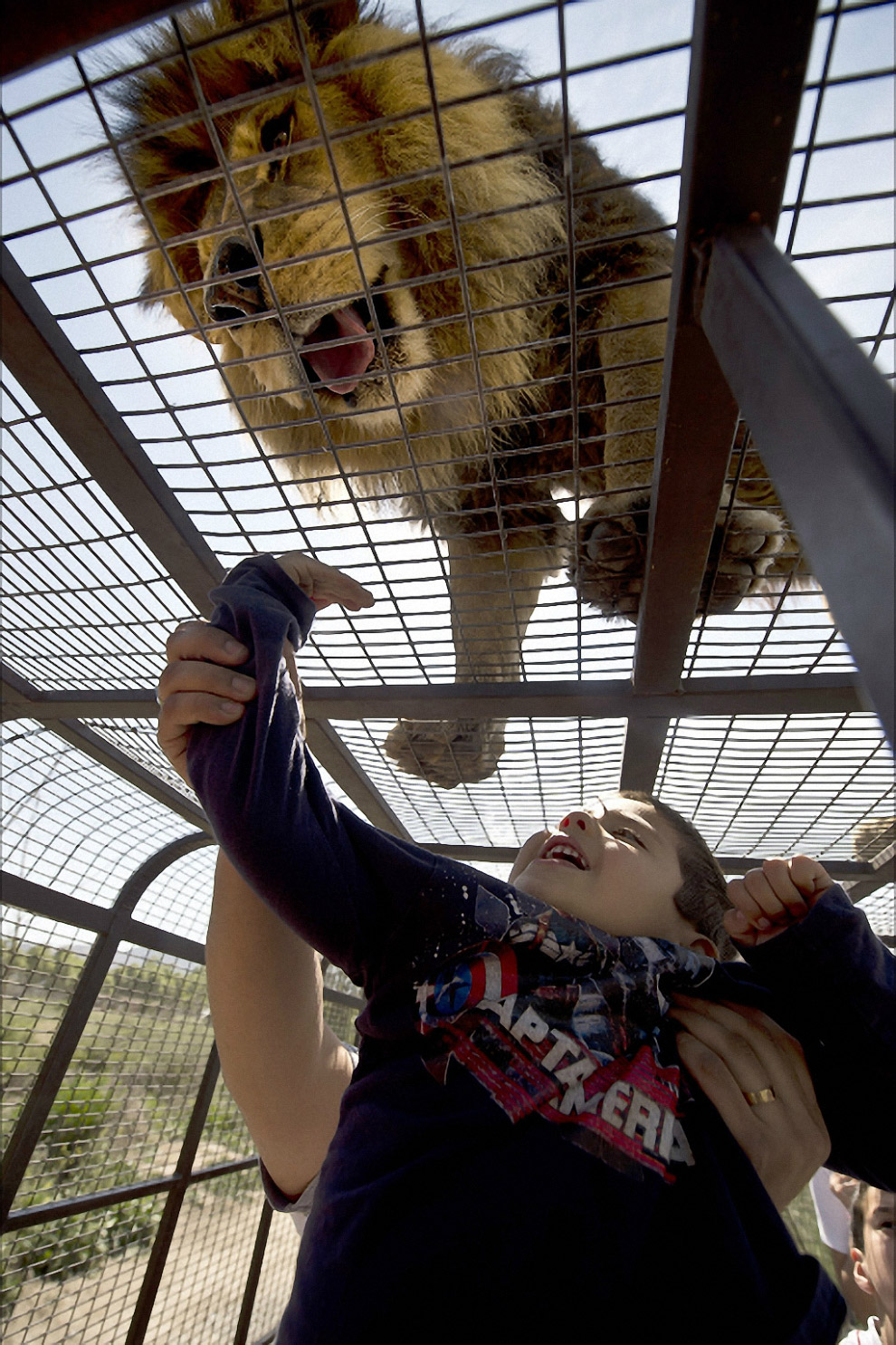 Сафари-парк в Ранкагуа, Чили, где хищники ходят там, где хотят, а люби приезжают к ним в клетках