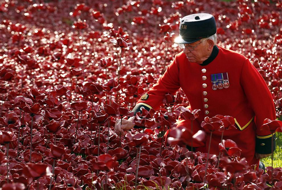 Море красных маков в лондонском Тауэре