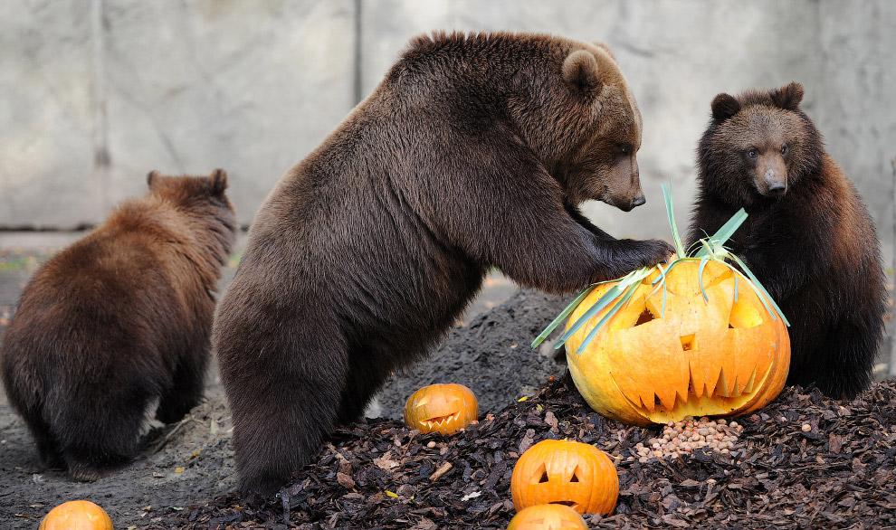 Медведи всеядны