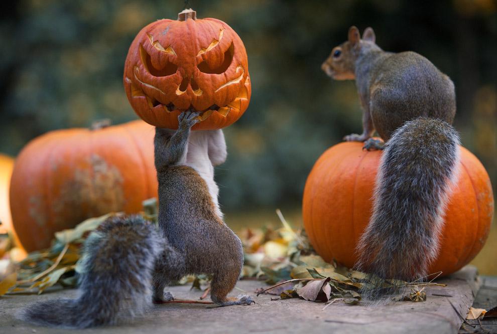 Хеллоуин у животных