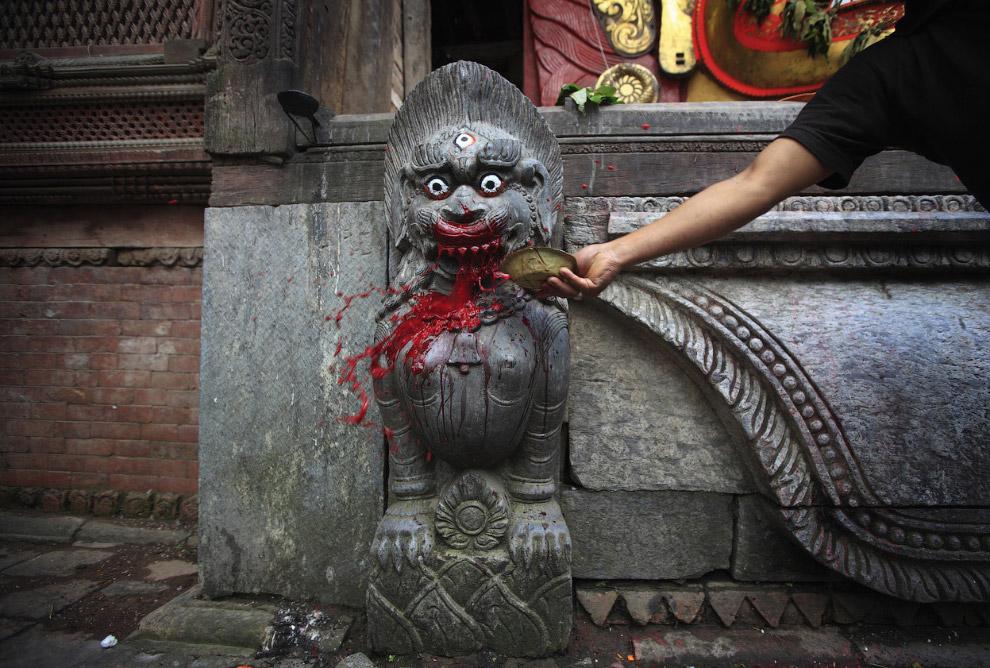Кровь для бога-львицы после принесения в жертву буйвола во время фестиваля Индра Джатра в Катманду