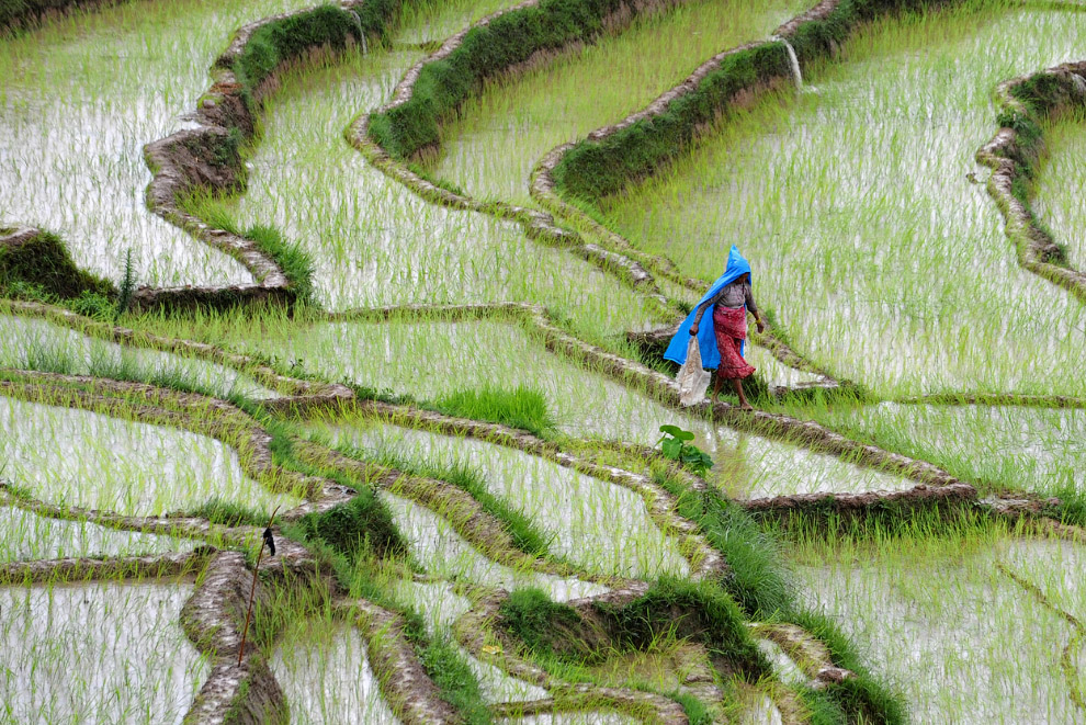 Рисовые поля в деревне Хокана на окраине Катманду