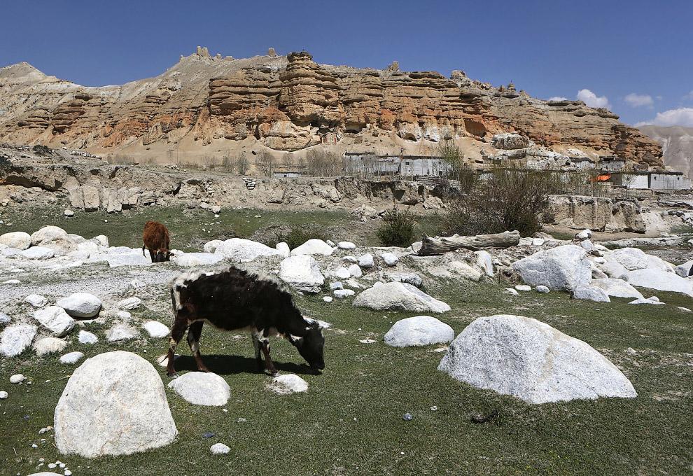 В этих пещерах, высеченных в скалах, люди жили в течение нескольких тысяч лет