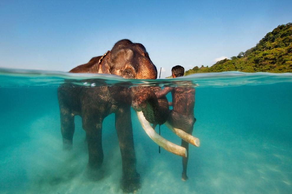 Морская прогулка со слоном