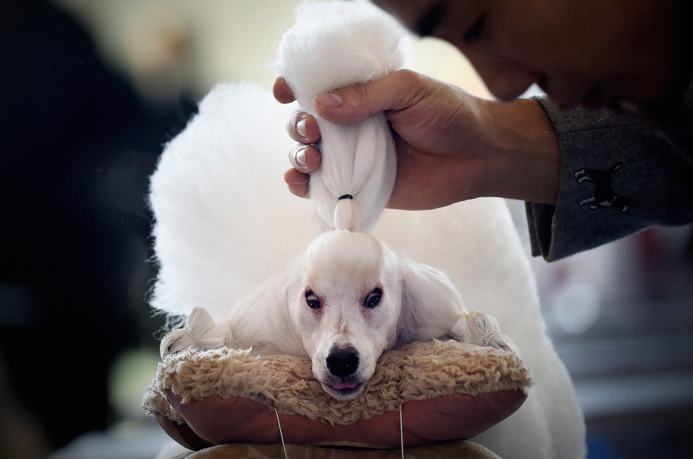 Международная выставка домашних животных в Пекине