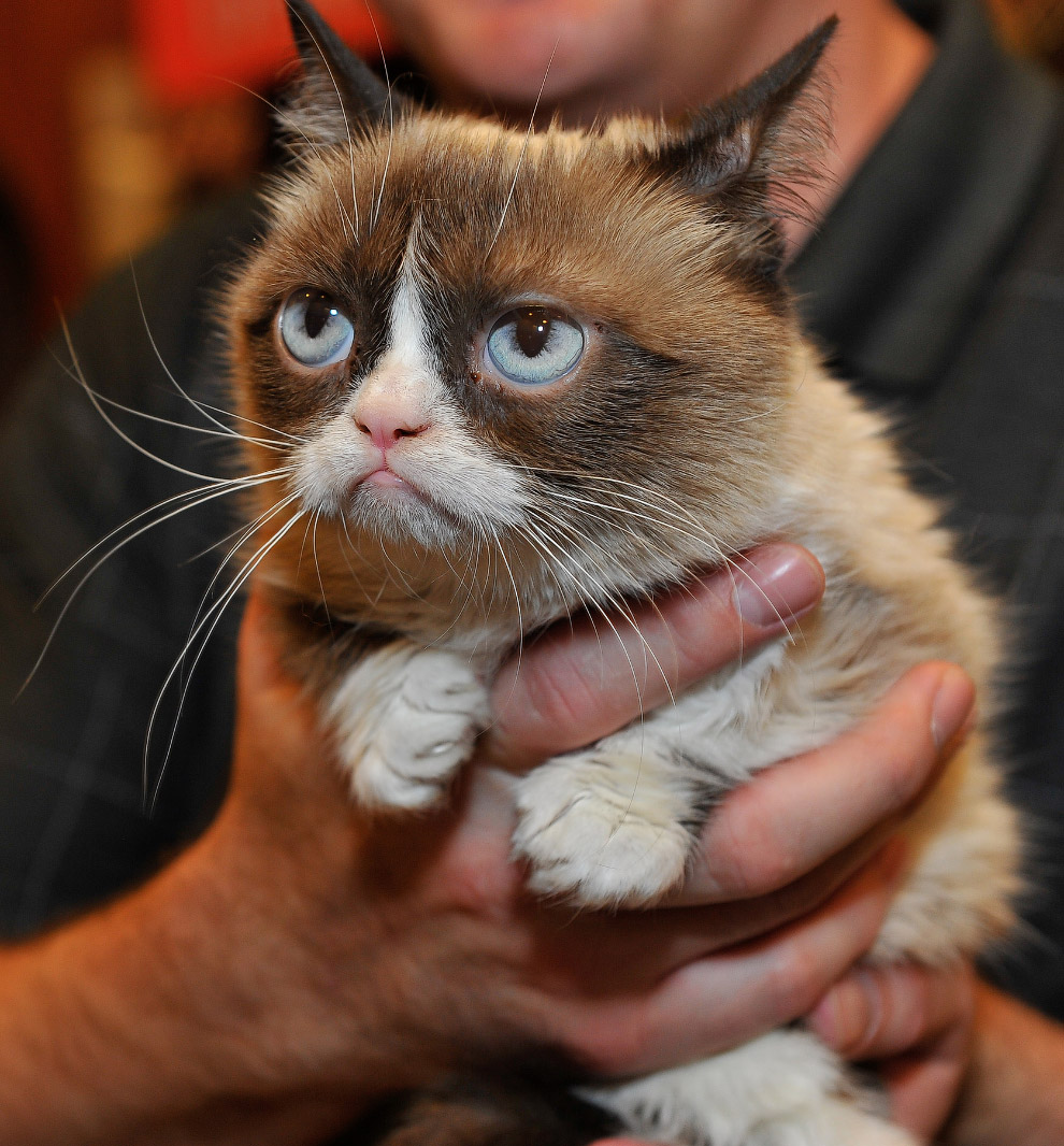 Сердитый кот, Сан-Франциско, штат Калифорния