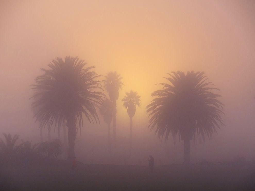 Пальмы в южной Калифорнии