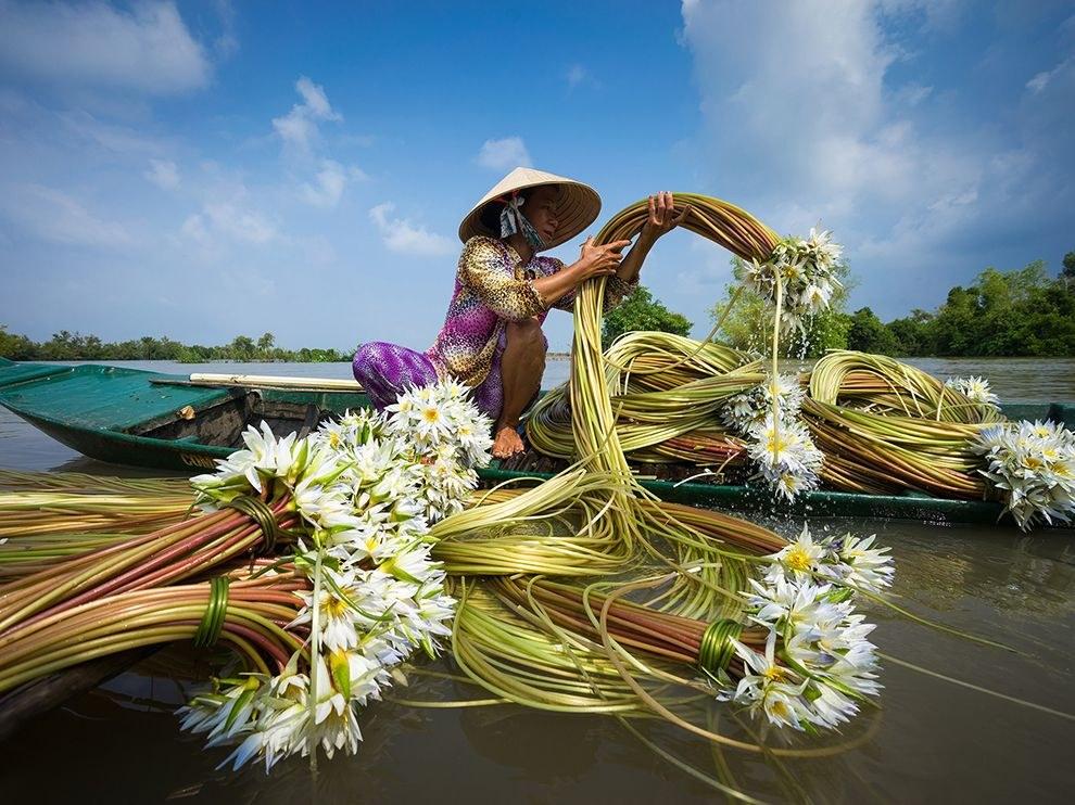 Дикие кувшинки растут на рисовых полях, покрытых водой, в дельте реки Меконг