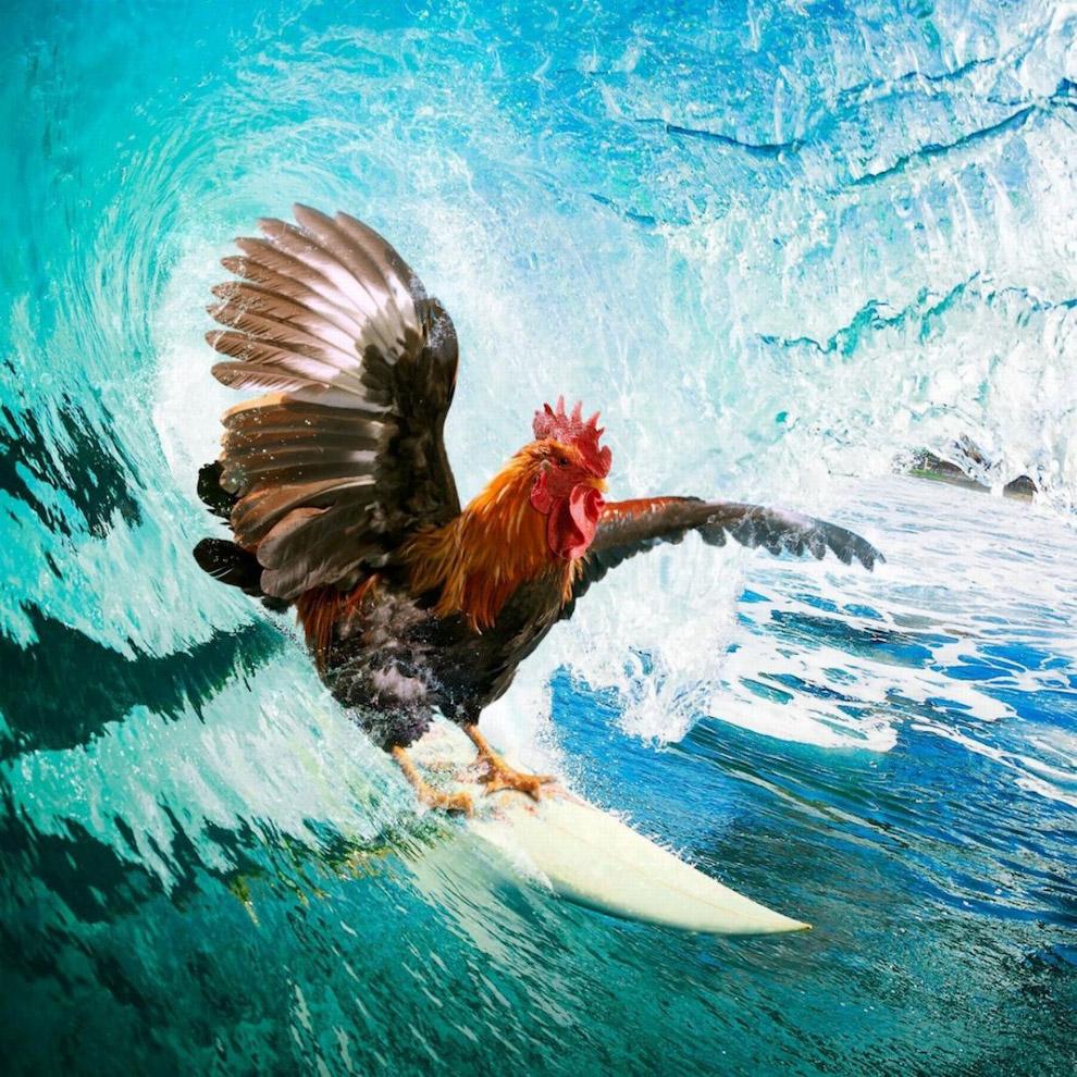 Петушиный серфинг