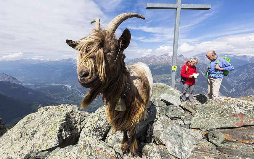 Вершина горы Ergischhorn в Швейцарии