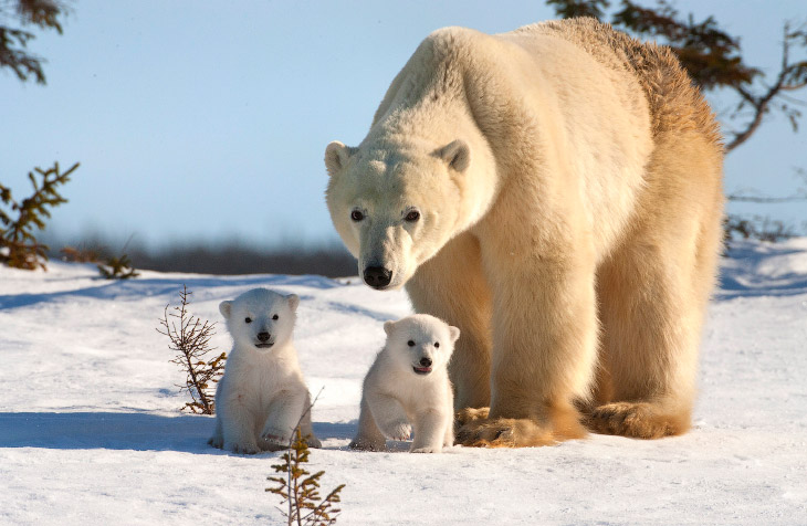 http://loveopium.ru/content/2014/12/bears/00s.jpg