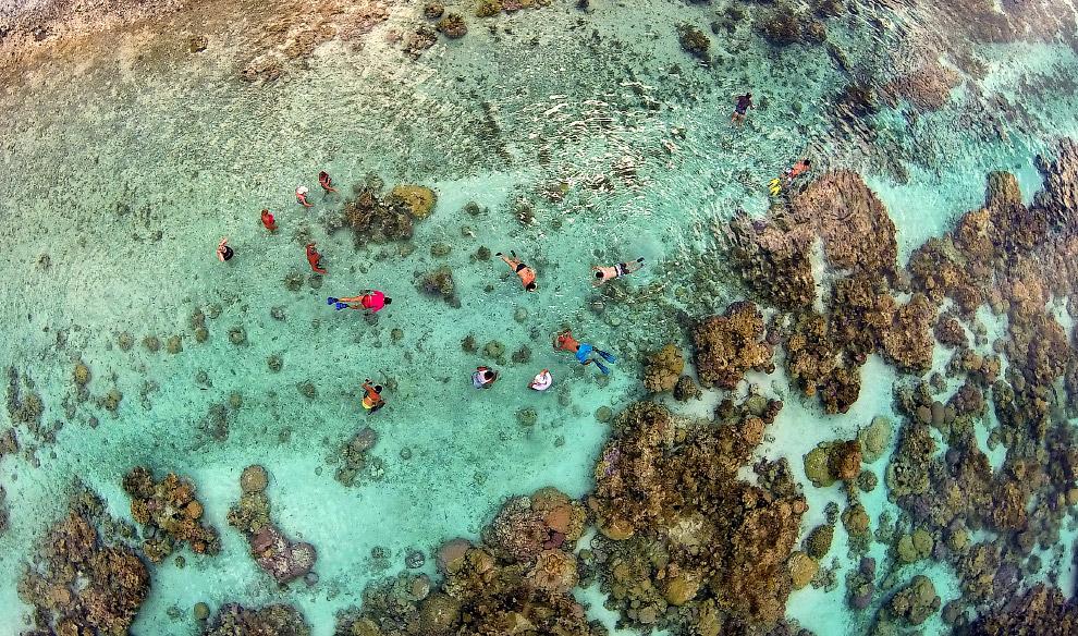 Коралловый сад в лагуне Тахаа во Французской Полинезии