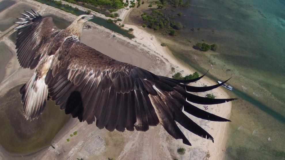 Победитель конкурса - красивый орел, величественно парящий над национальным парком в Индонезии