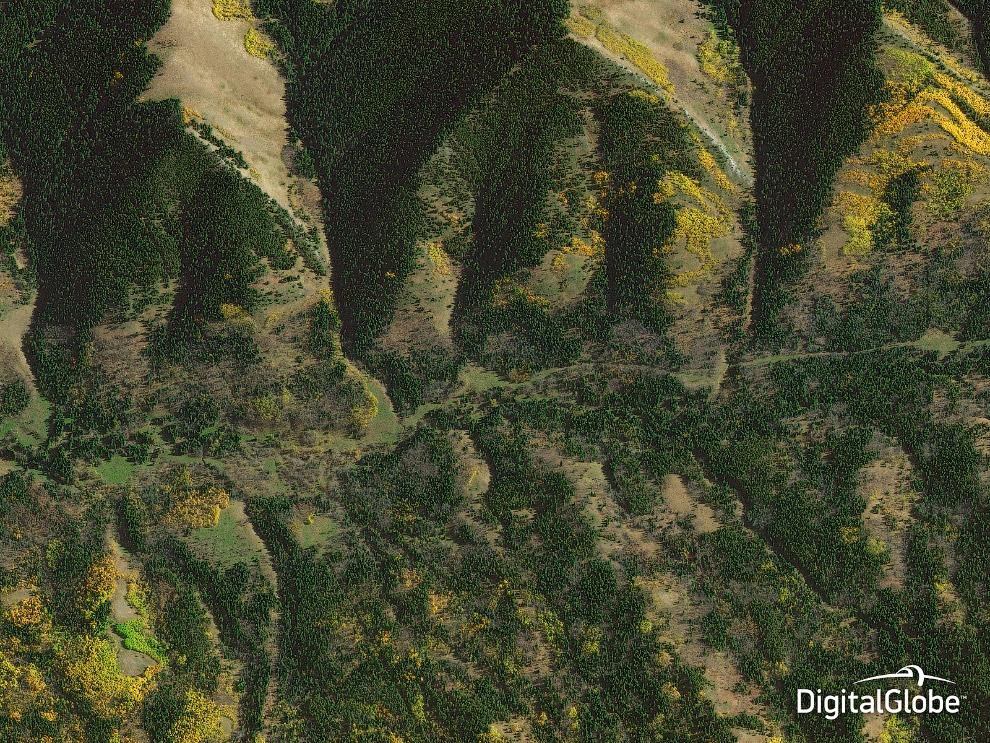 Лесные массивы в Альберте, Канада