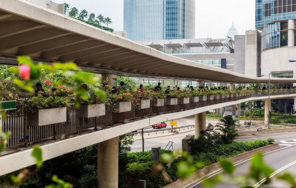 В Гонконге необычайно красивые надземные переходы-галереи