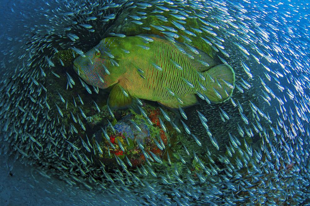 Жители Большого Барьерного Рифа