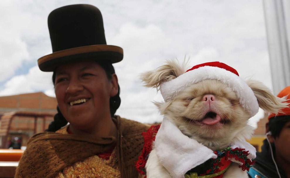 Похоже, пес доволен. Эль-Альто, Боливия