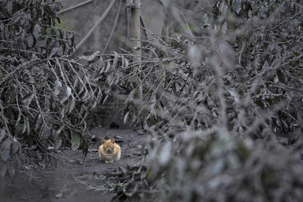 Пепельные пейзажи во время извержения вулкана Синабунг