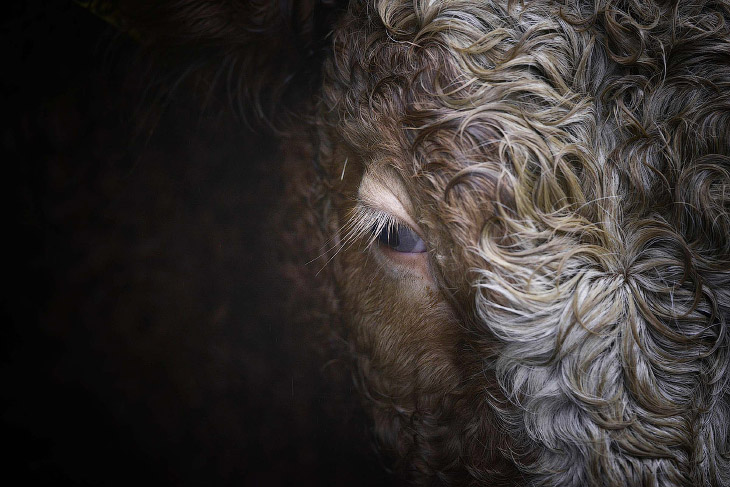Животные в фотографиях фото новости