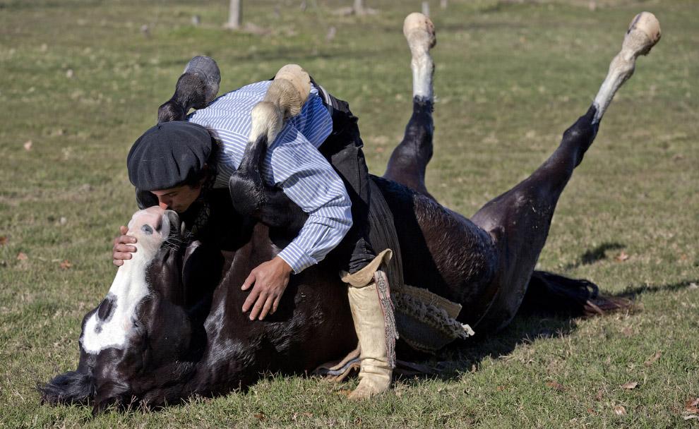 Дрессировщик Мартин Тата из Аргентины считает, что с лошадями нужно разговаривать без криков, кнутов и уздечек