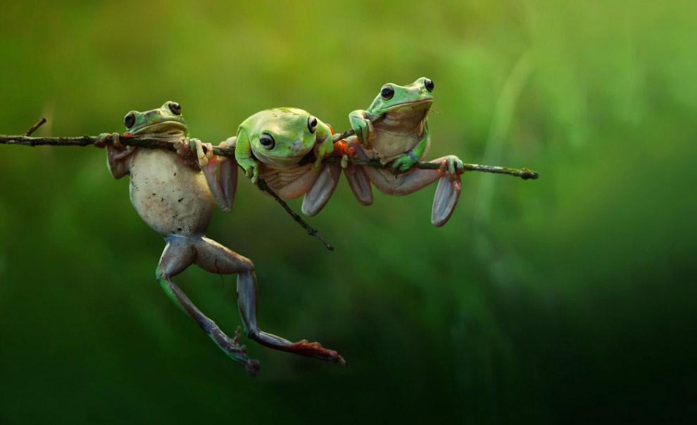 Лягушки на острове Борнео