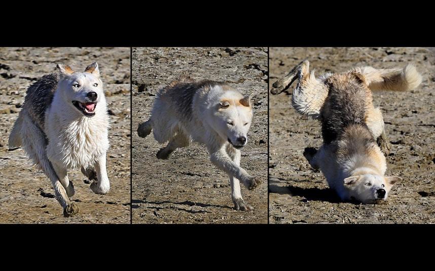 Неуклюжий пес на берегу озера в Узундере в восточной Турции