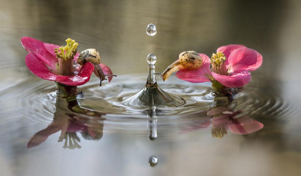 Улитки с интересом смотрят на падающие капли воды в друг