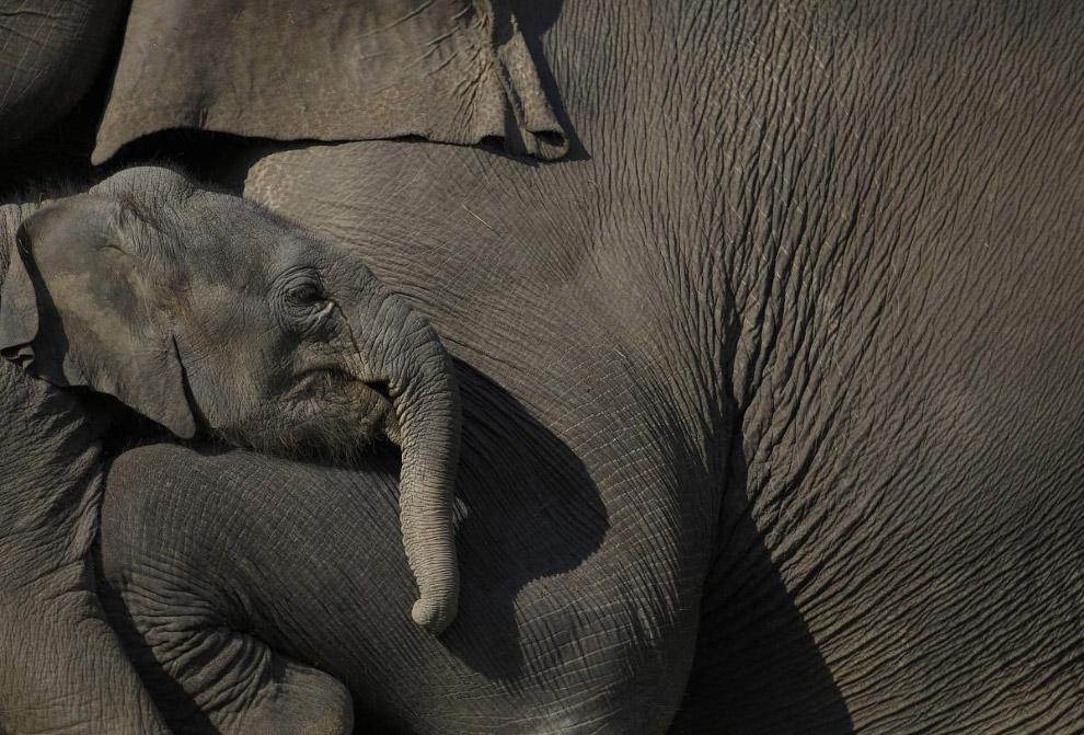 Стадо слонов в Национальном парке Читван к югу от Катманду