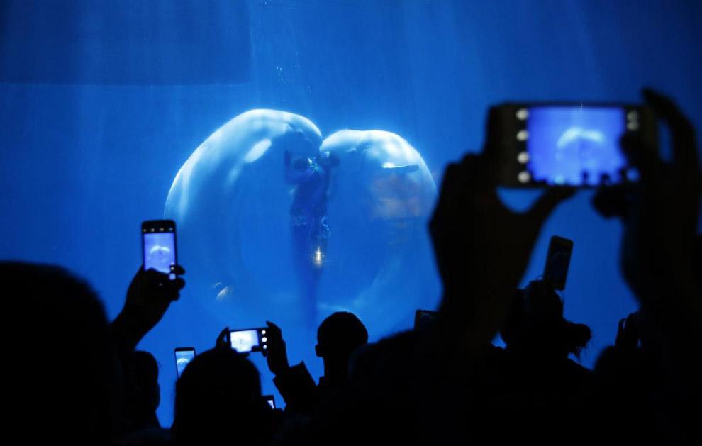 Белухи и их тренеры образовали настоящее «сердце океана» на шоу в Харбине