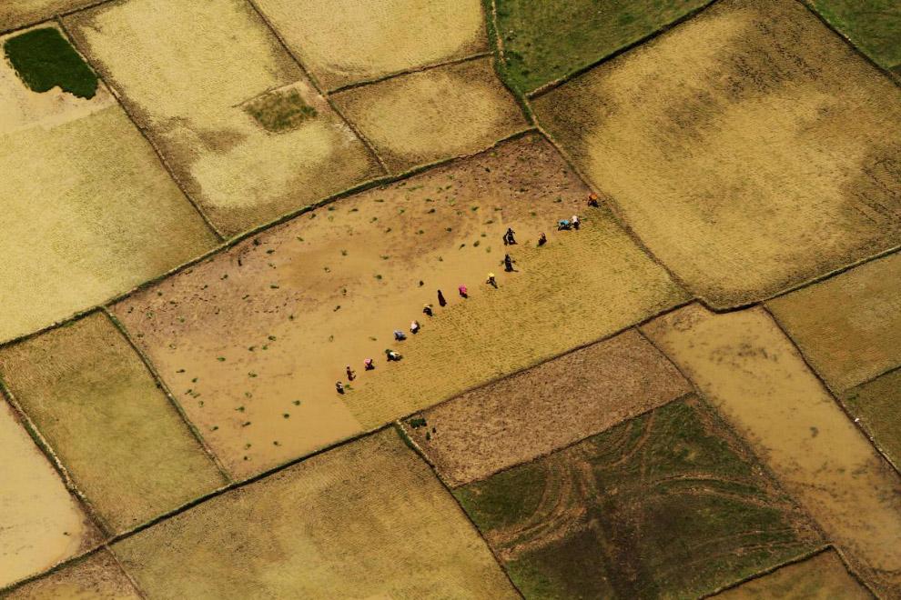 Фермеры на рисовом поле на окраине Бхубанешвара