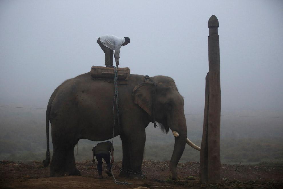 Погонщик готовит твоего слона к фестивалю
