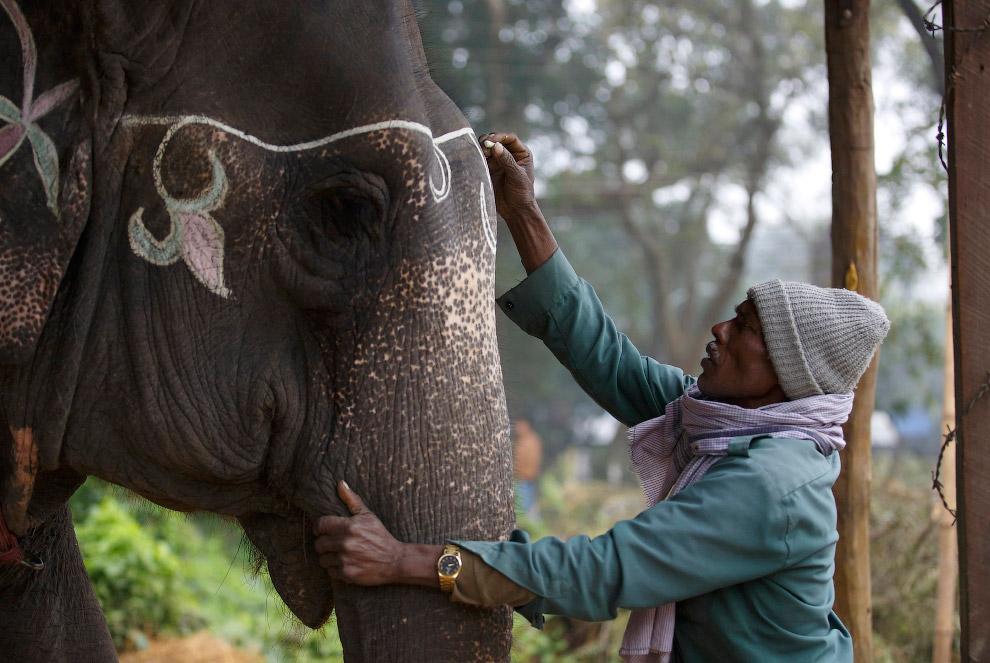 NEPAL-ANIMALS