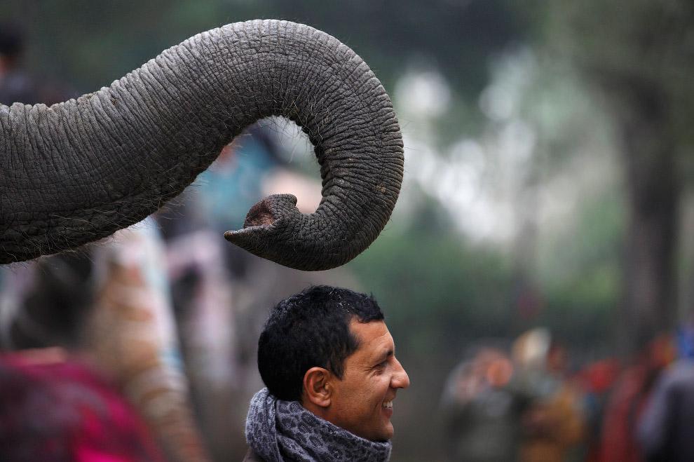 Фотография на память перед началом фестиваля слонов в Непале