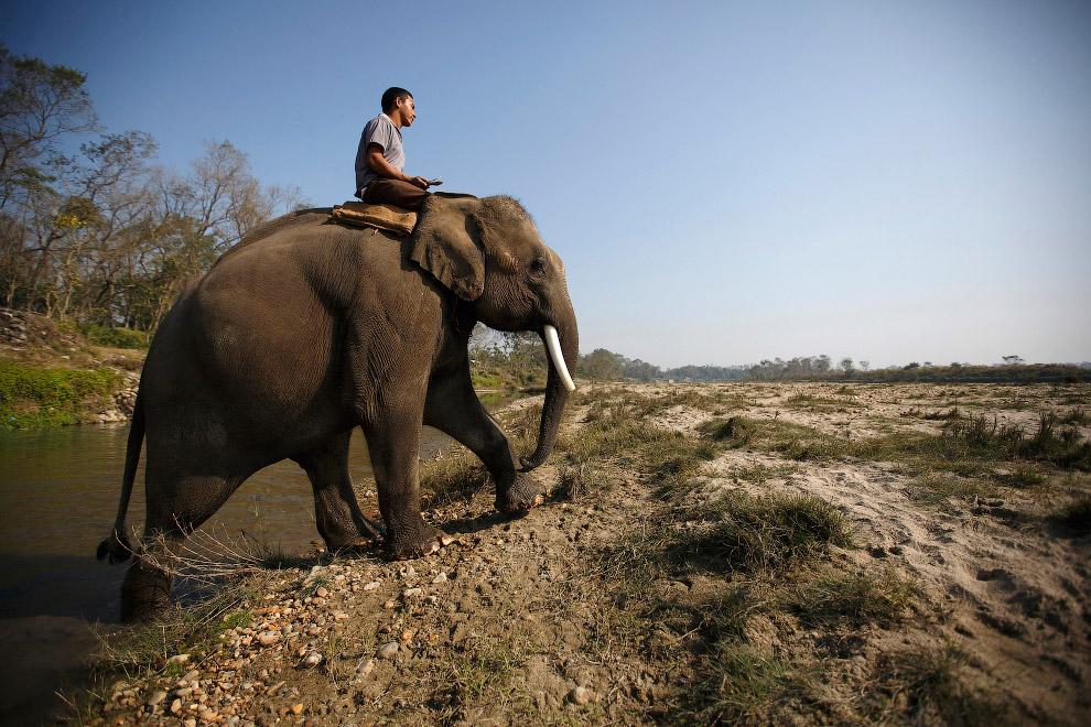Фестиваль слонов в Непале