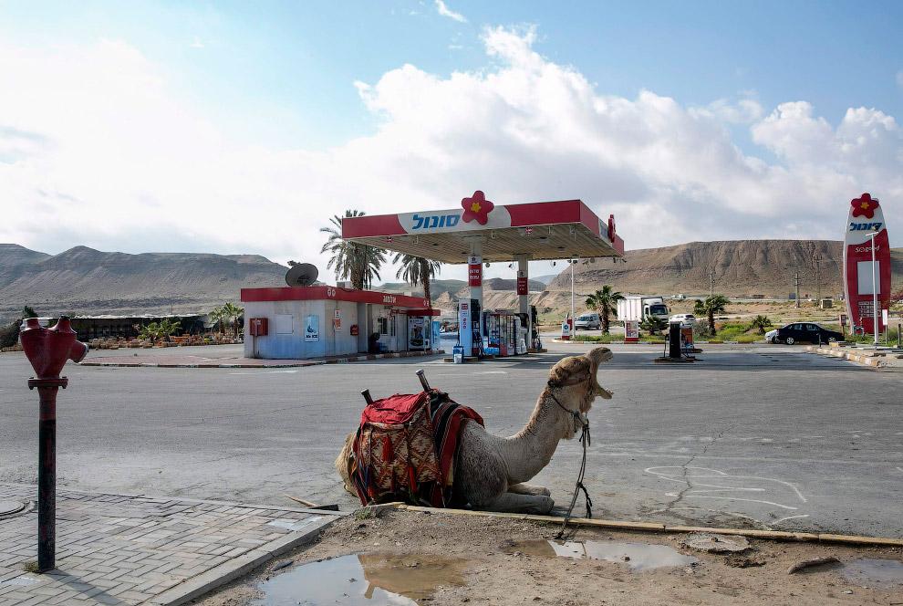 Заправочная станция в городе Иерихон на Западном берегу реки Иордан