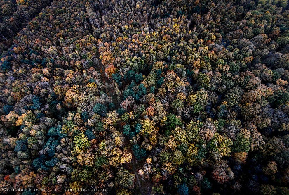 Лес во Франции.