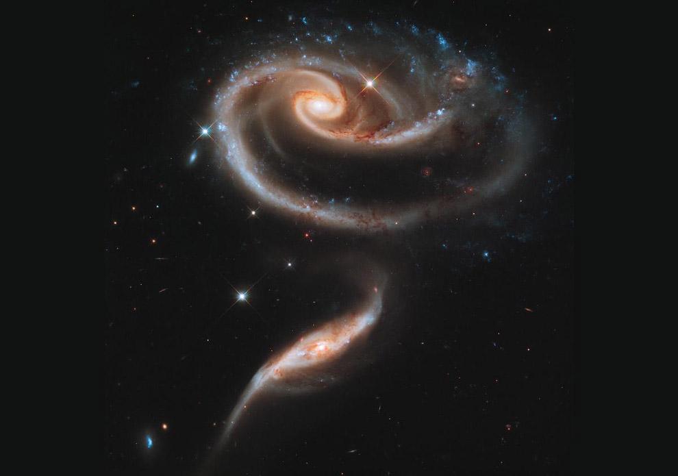 Галактическая Роза