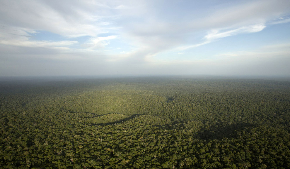 Вид на джунгли Амазонки, здесь есть и наша башня