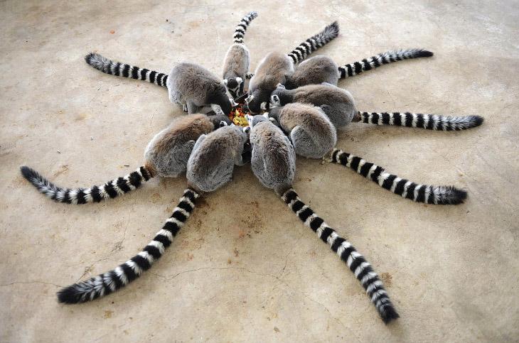 Жизнь самых интересных животных из разных уголков мира