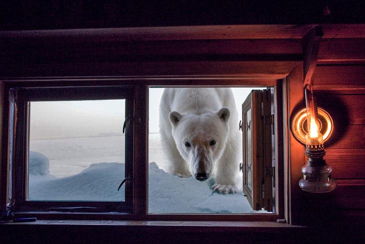 Неймовірні фотографії тварин Пола Ніклу