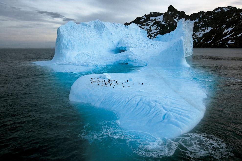 Пінгвіни на крижині