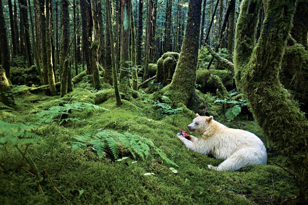 Ведмідь в лісі