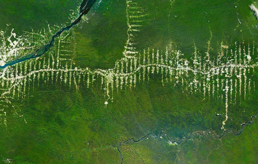 Уничтожение и вырубка тропических лесов Амазонки в Бразилии