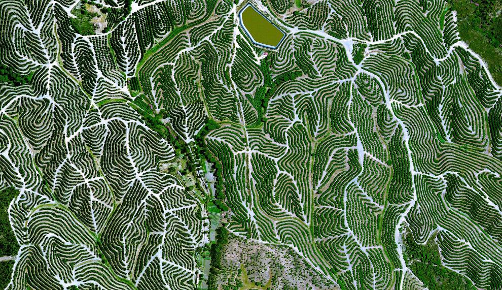 Фруктовые деревья в провинции Уэльва, Испания