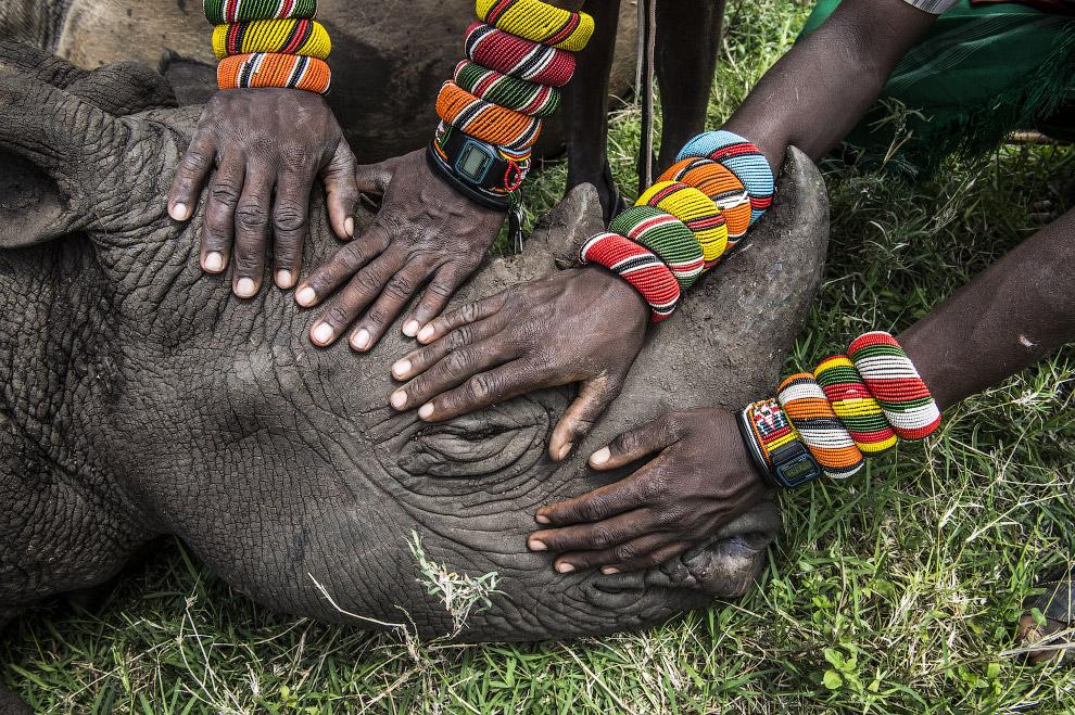 Воины спасли носорога