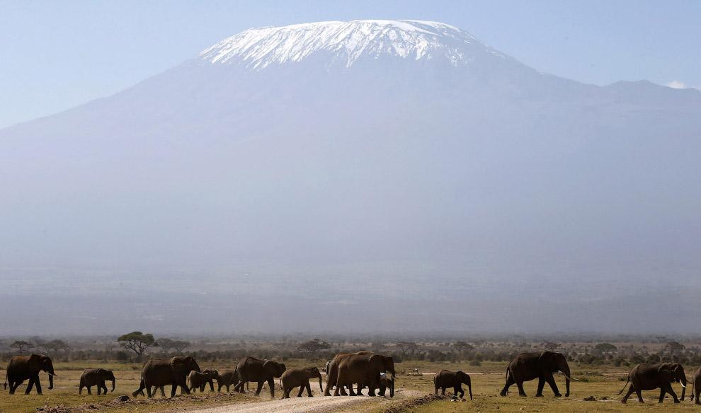 Гора Килиманджаро и стадо слонов в Национальном парке Амбосели в Кении