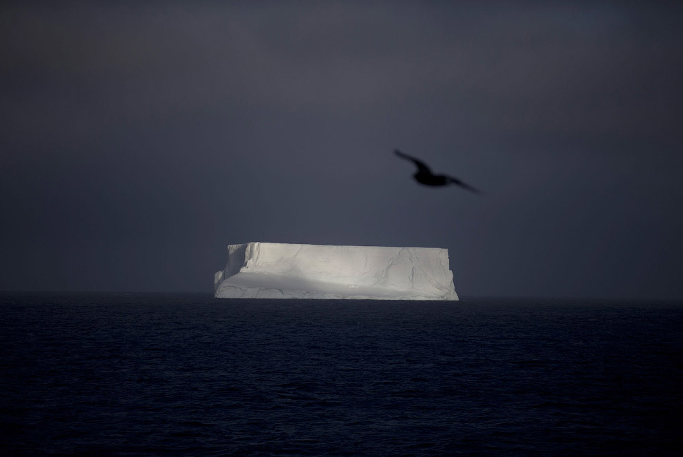 Айсберг у архипелага Южные Шетландские острова