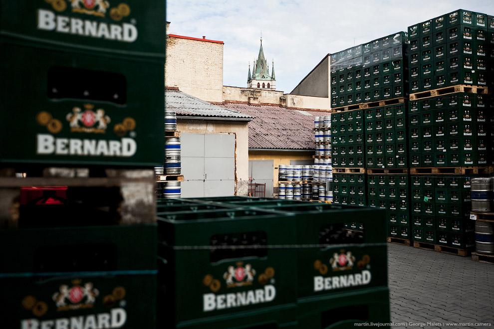 Пиво Bernard