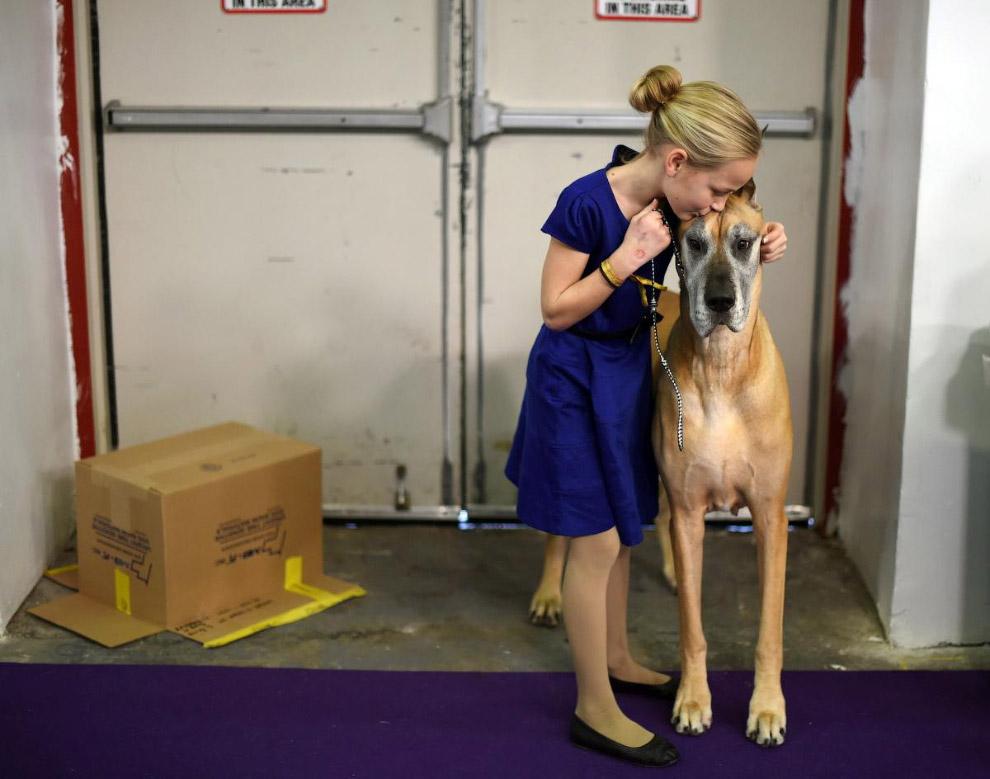 Выставка собак Westminster Kennel Club 2015