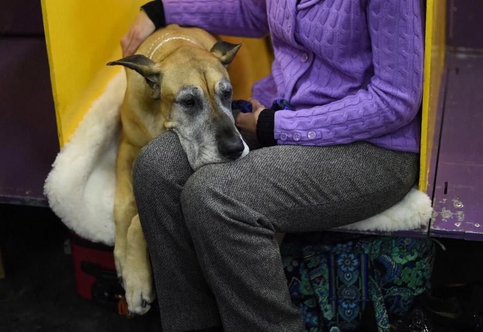 http://loveopium.ru/content/2015/02/dogs/22.jpg